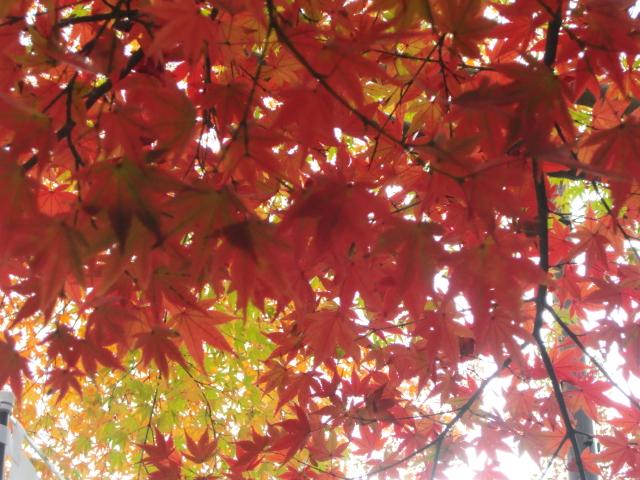 京都で紅葉を愛でる VOL.1