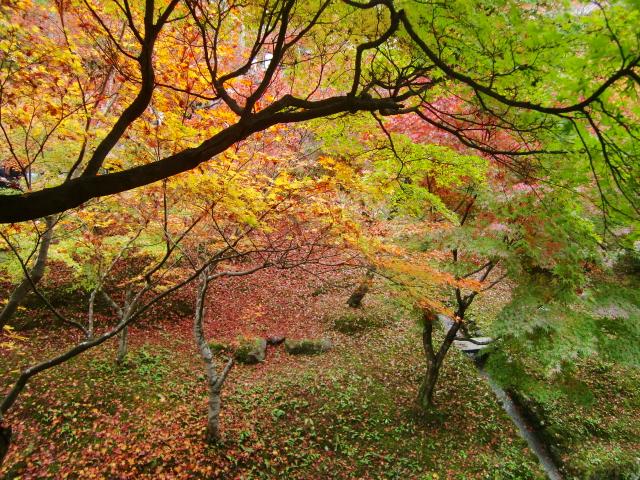 Kyoto,Nara 11.2009 262