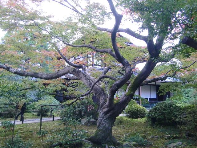 Kyoto,Nara 11.2009 345