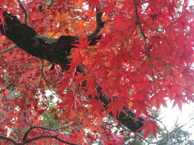 Kyoto,Nara 11.2009 434