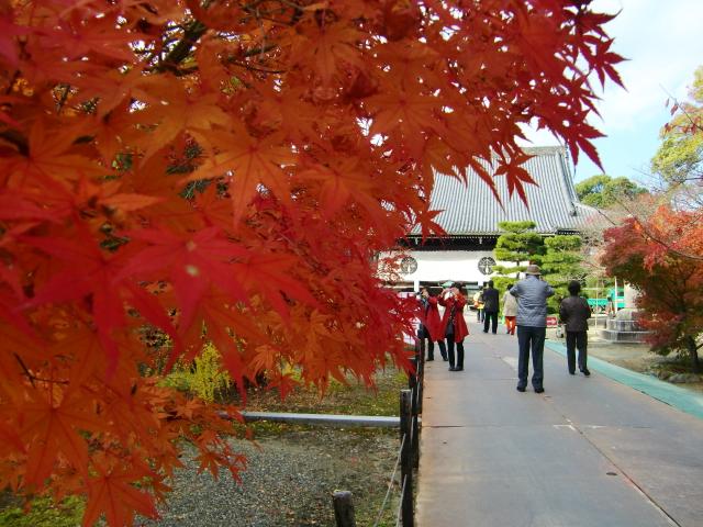 Kyoto,Nara 11.2009 511