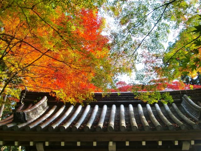 京都で紅葉を愛でる VOL.2