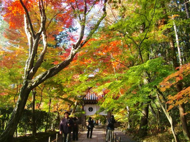Kyoto,Nara 11.2009 542
