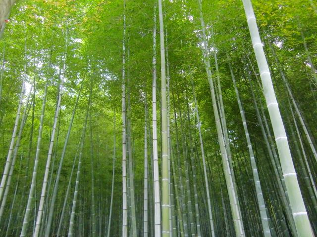 Kyoto,Nara 11.2009 558