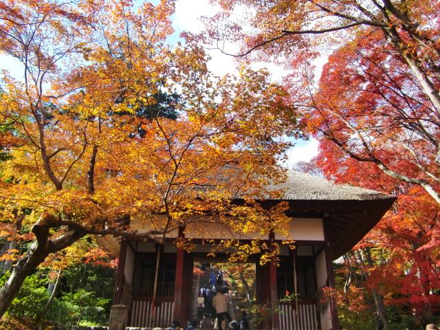 Kyoto,Nara 11.2009 563