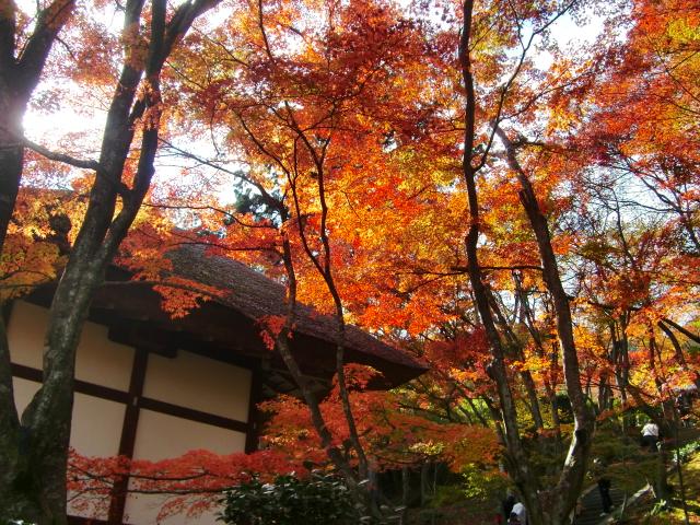 Kyoto,Nara 11.2009 569