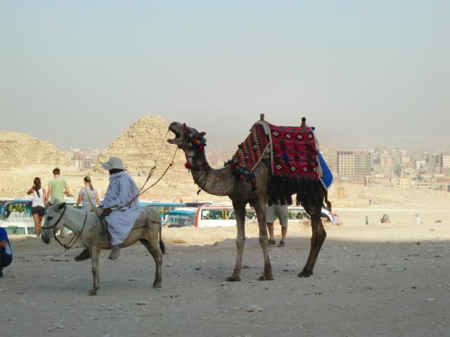 Egypt 10.2010 1116