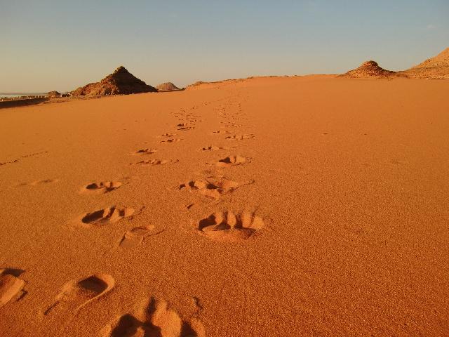 Egypt 10.2010 869