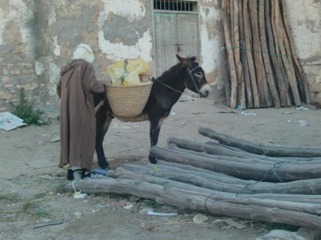 Morocco 273