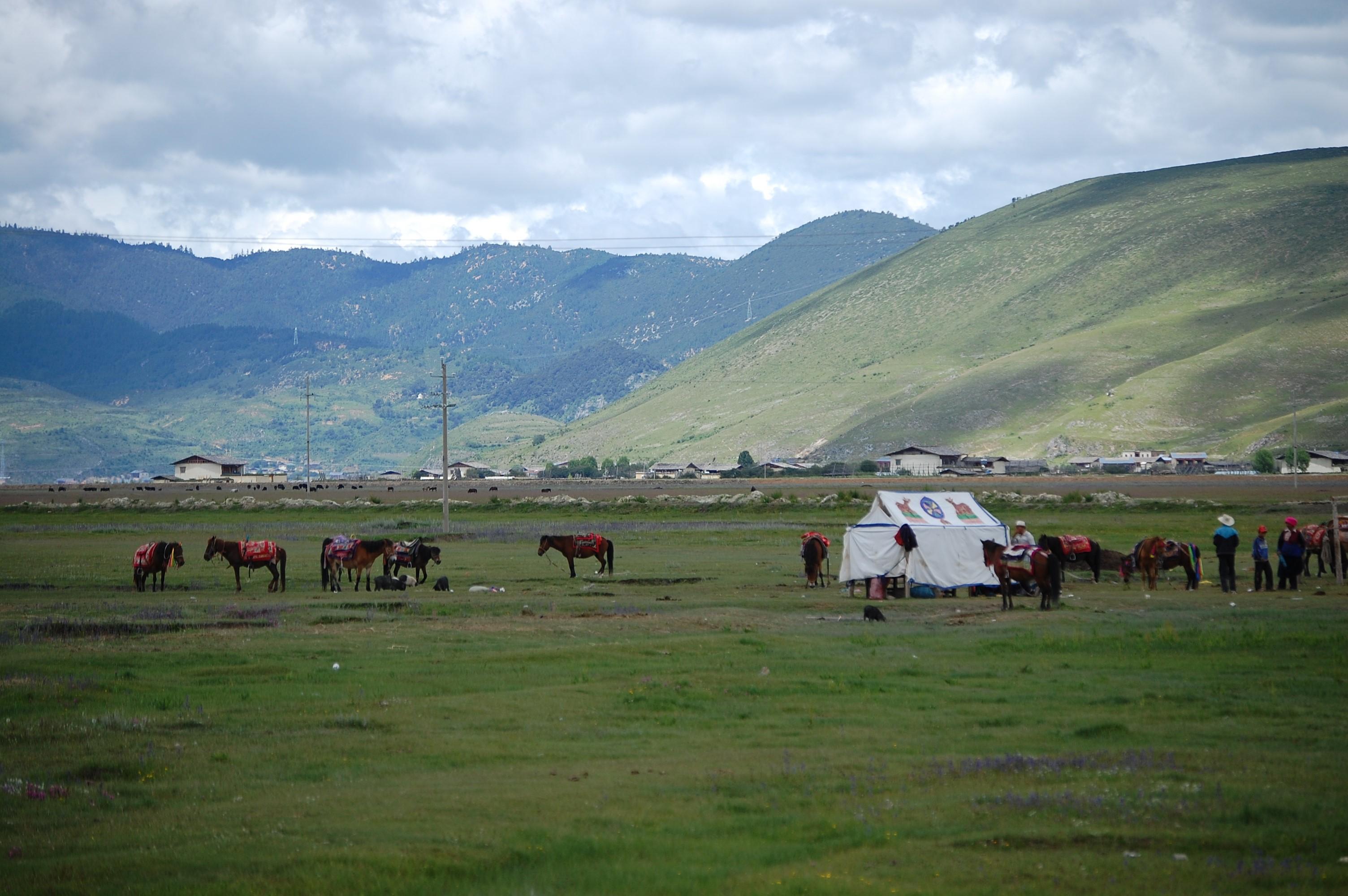 香格里拉 ~シャングリラ最大の放牧地、ナパ海~