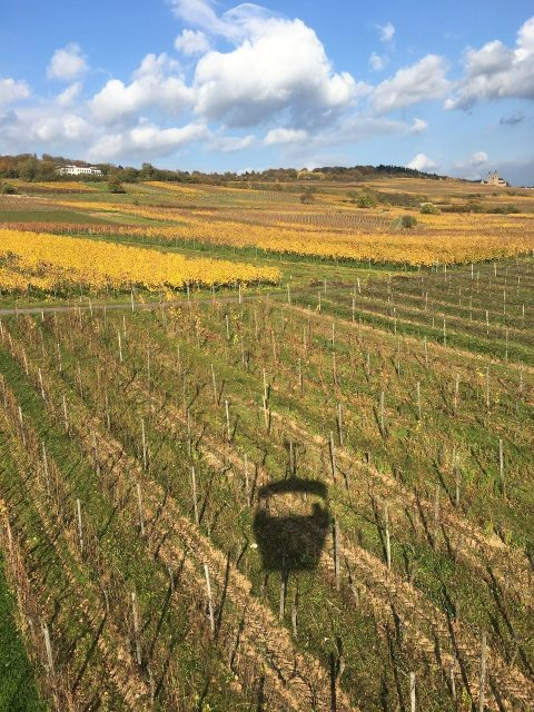 リューデスハイム、ゴンドラから見下ろすブドウ畑が美しい!