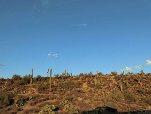 アリゾナ州をドライブ!サボテンの山を抜けてフェニックスからフラッグスタッフへ