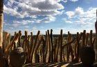 ナミビアのラグジュアリーロッジ、オマアンダの伝統的な藁葺屋根のお部屋滞在